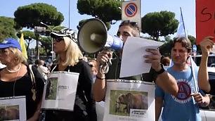 """La mobilitazione degli animalisti   """"Salviamo i cuccioli di Daniza""""    ft"""