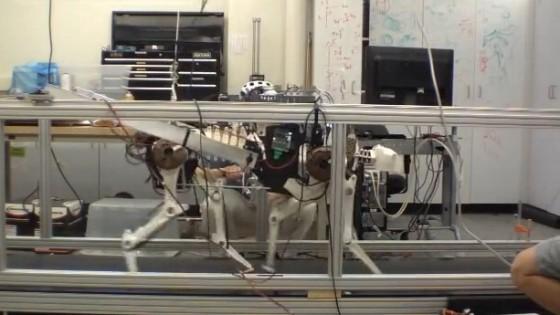 """Hanno inventato il robot """"ghepardo"""". Corre a 50 Km all'ora"""