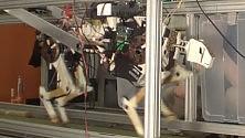 """Ecco il robot """"ghepardo"""" corre a 50 kmh /   Video"""