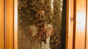 Piacenza, invasione di api in casa ''Benvenute''. E diventa apicoltore