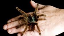 Cinque falsi miti  su ragni e insetti