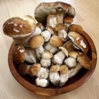 Ci sono funghi sconosciuti nei nostri piatti, lo dice il loro Dna