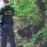 """Orso morto in Abruzzo ucciso con fucilata. Ministro Ambiente: """"Stop radiocollari con..."""