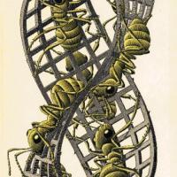 Escher. La mostra al Chiostro del Bramante