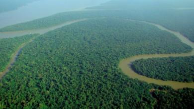 Germania, torre record per salvare l'Amazzonia