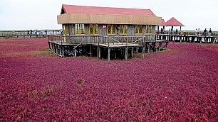 Marea rossa, l'alga colora la Cina