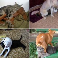 Cani e gatti: chi predomina si accomoda