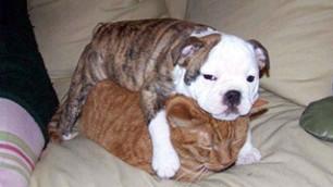 Il peso dell'amicizia tra cani e gatti