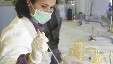 Tumori, la super proteina  blocca metastasi nei topi