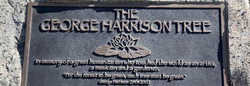 """George Harrison, l'uomo che per scoprire la musica evase dai Beatles. Esce """"The Apple Years""""   foto    video"""