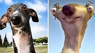 Facce da cani, strane somiglianze