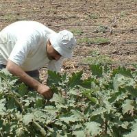 Intel-Ifad, un software per i contadini poveri