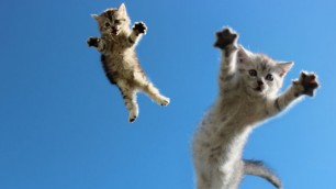 Ma quale balzo felino Il gatto è un ninja