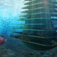 """L'albero di mare, un """"motel"""" per animali e piante"""