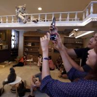 Thailandia, apre il Purr Cat Cafe Club: in fila per un caffè con i gatti