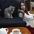 In fila al Purr Cafè un espresso con i gatti