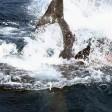 """Squalo vs squalo attacco """"cannibale"""""""