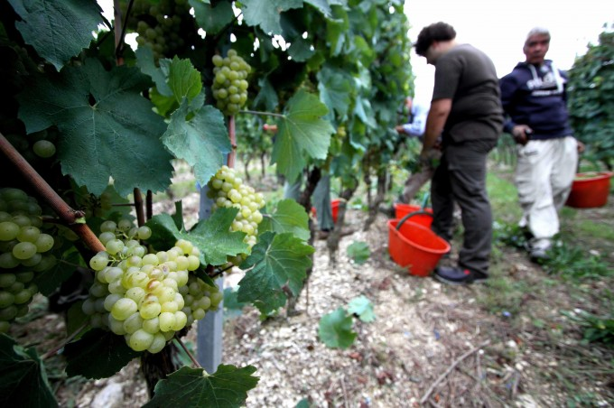 Vini, la prima volta del bianco: al top il Trebbiano d'Abruzzo