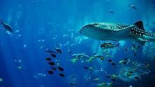 Emissioni Co2, oceani più acidi del 26% in 200 anni