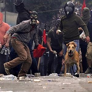 """Atene: addio a """"Loukanikos"""", cane black-bloc e anti-Troika"""