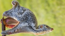 Animali nei loro habitat  nelle grandi foto per i desktop