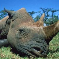Wwf: Europa al centro dei traffici criminali di specie protette