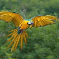 Usa, il pappagallo scomparso torna dopo quattro anni ma parla spagnolo