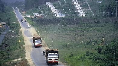 Allarme olio di palma: anche uno snack può aver rubato un albero alla foresta   Foto