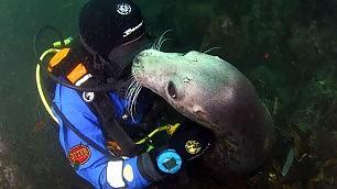 Gb, una foca per amico: l'abbraccio del sub