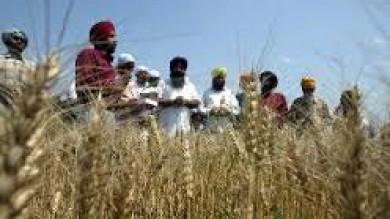 """Indiani Sikh: """"Dieci ore a lavorare sui campi ma te ne pagano solo due"""""""