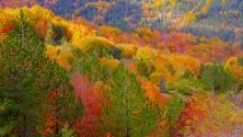 I colori dell'autunno  nei boschi d'Abruzzo e Carnia
