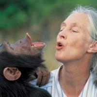 """Jane Goodall, la donna che sussurra agli scimpanzé: """"Specie a rischio"""""""