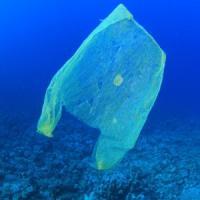 Inquinamento, un milione e mezzo di animali vittime di rifiuti di plastica negli oceani