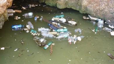 Inquinamento, 1,5 milioni di animali  vittime di rifiuti di plastica negli oceani