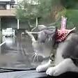 Il gatto e il tergicristallo battaglia in automobile