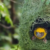 Animali o architetti? Il nido è un'opera d'arte
