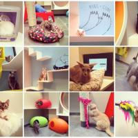 Parigi: sala da gioco e cucce-suite, l'hotel di lusso è per gatti