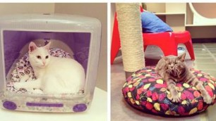 Sala da gioco e cucce-suite nell'hotel di lusso solo gatti    Il video