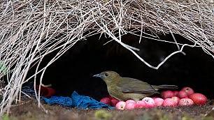Quel nido è una forza della Natura