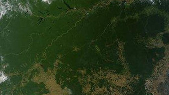 Amazzonia, deforestazione senza limite: +290% in Brasile