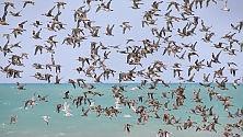 """Anche uccelli sfruttano le """"partenze intelligenti"""""""