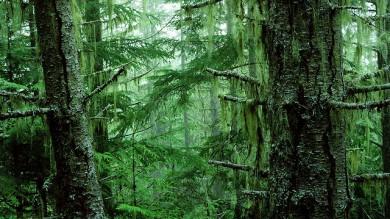 Ultime Notizie: Amazzonia, deforestazione senza limite: +290% in Brasile