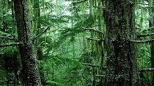 Deforestazione senza limite: +290% in Brasile