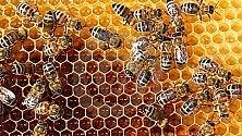 Api, strage per insetticidi  rabbia produttori di miele
