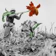 Fiori al posto delle armi   il fotoprogetto pacifista