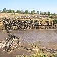 La migrazione dei branchi   Timelapse nel Serengeti