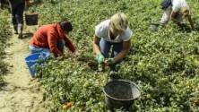 Schiave romene violentate nei campi, scattano le indagini