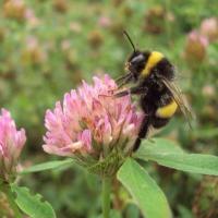 Farfalle, l'operazione polline è un successo