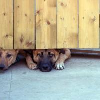 Canada, i cani del soldato Nathan Cirillo
