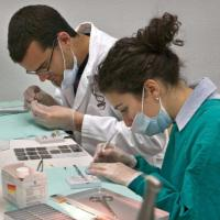 """Tumori al cervello, studio Usa: """"Staminali uccidono la malattia nei topi"""""""